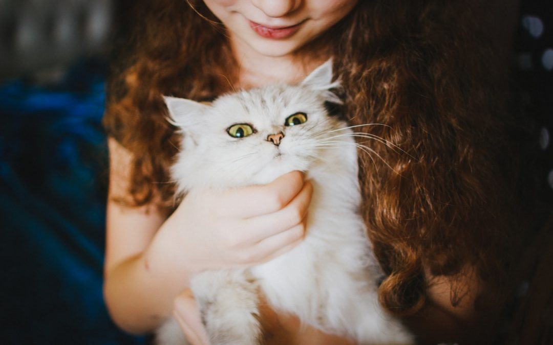 Tips To A Happy and Healthy Cat