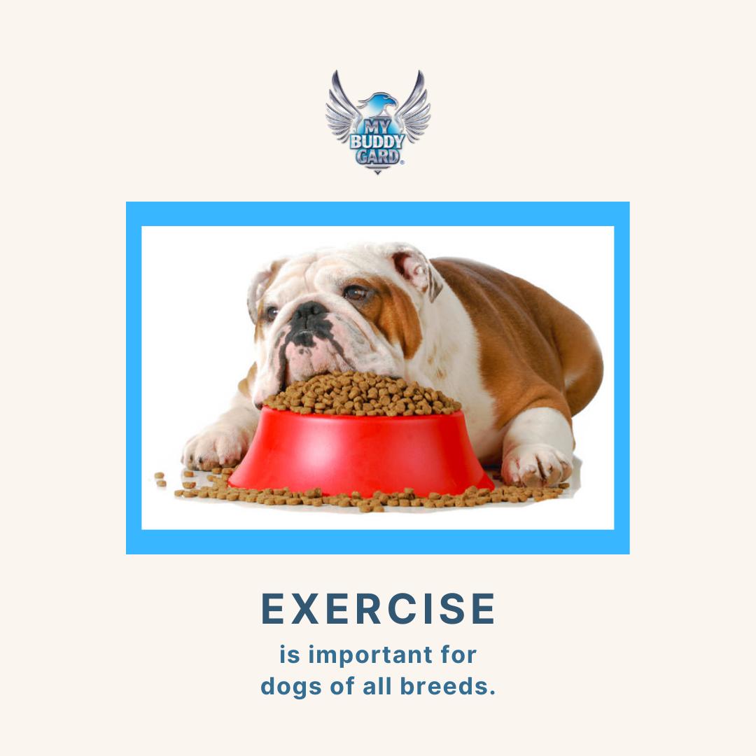 National Pet Obesity Awareness 2021